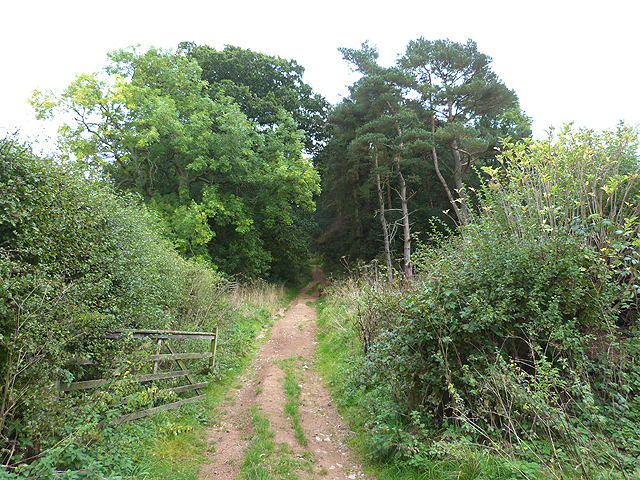 Track into the woods near the Mains Farm