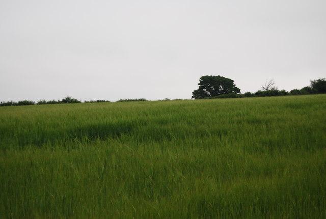Farmland above Ardingly Reservoir