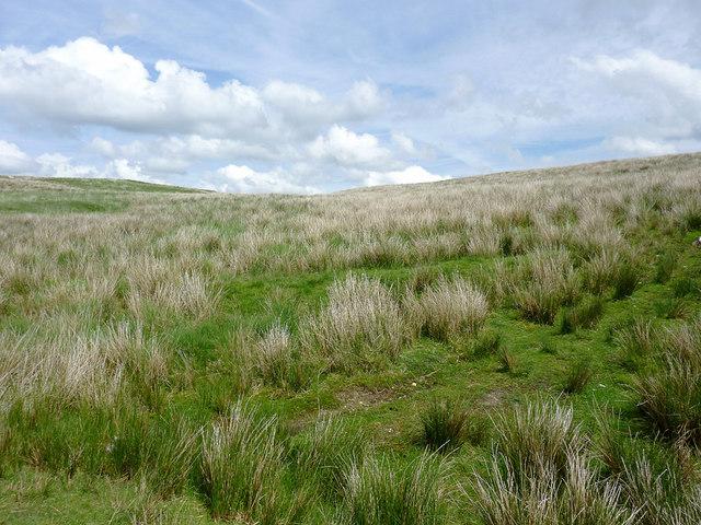 Moorland  south-east of Drygarn Fach, Powys