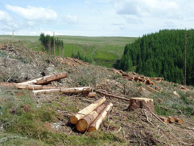 Forestry clear fell above Nant-y-Fedw, Powys