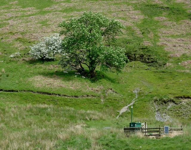 Hillside trees in Cwm Irfon, Powys