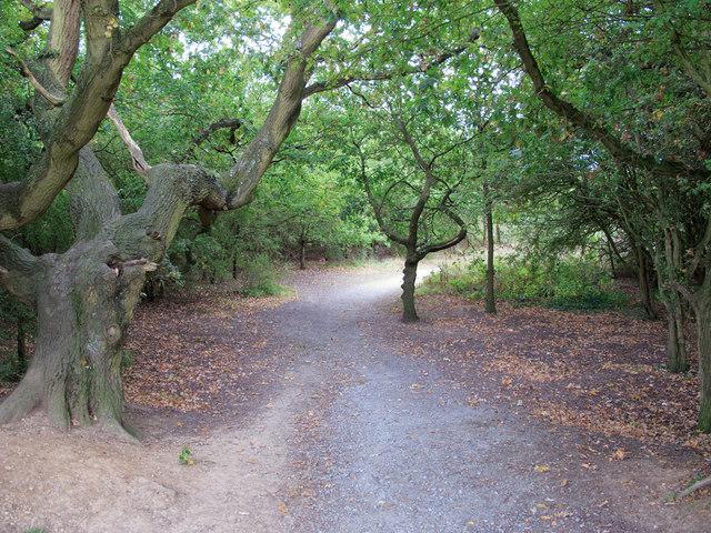 Path through Woodland, Cranham Brickfields Nature Reserve
