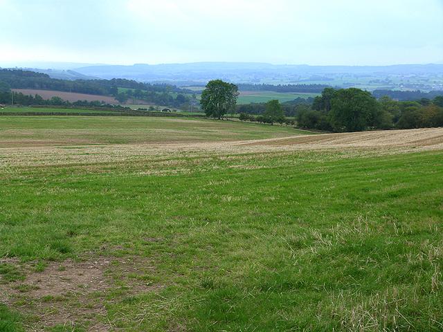 Field near Scales