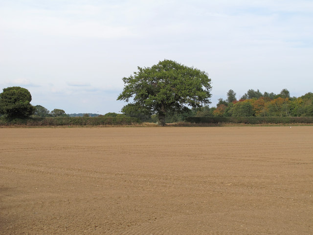 Tilled land, Boxted