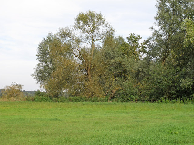 Trees near the Stour, Great Horkesley