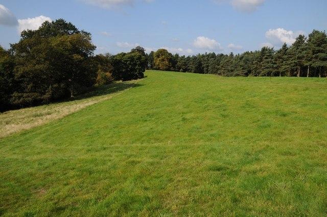 Parkland in Hagley Park