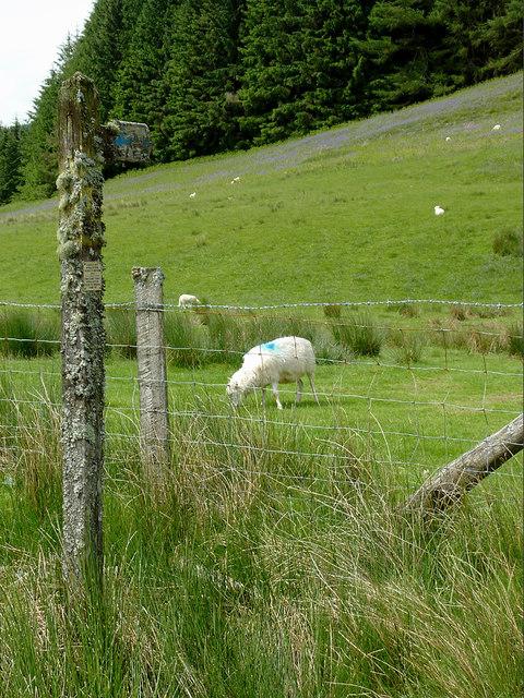 Hill pasture in Cwm Irfon, Powys