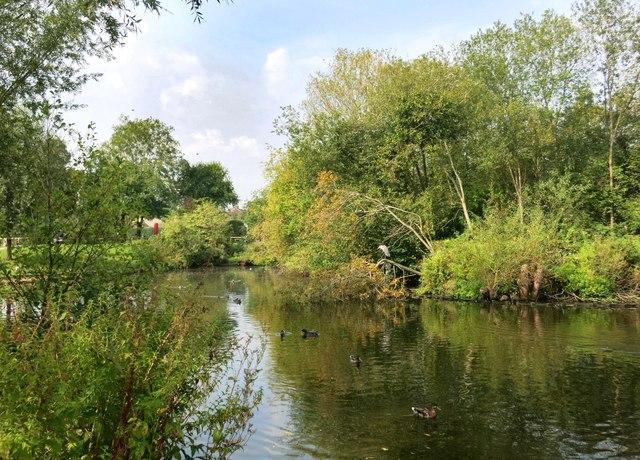 Lake in Meadowbank Park
