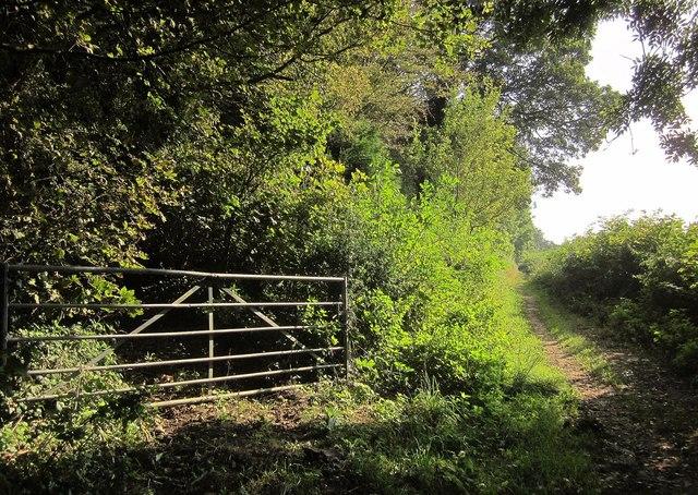 Gate into Little Sodbury Wood
