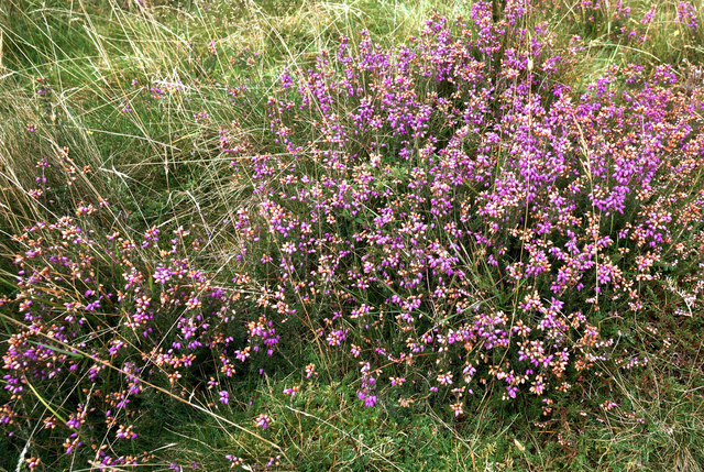 September heather