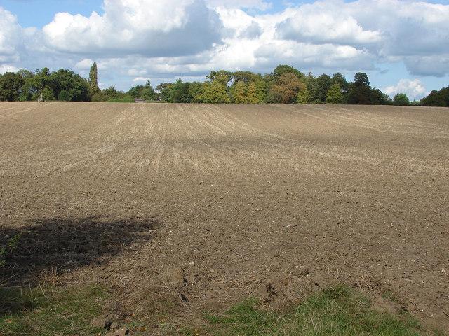Field north of Binfield