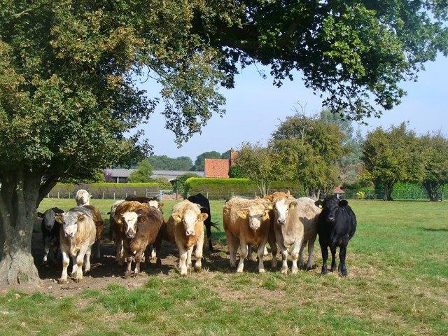 Pimlico - Well Farm