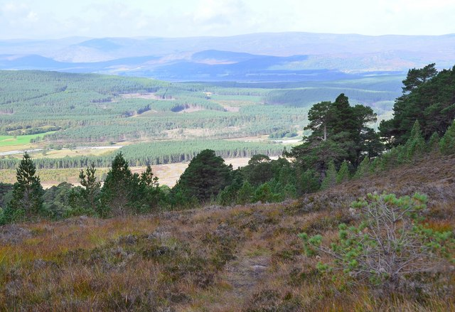 Heather moor and pine woods, Creag Ghiuthsachan