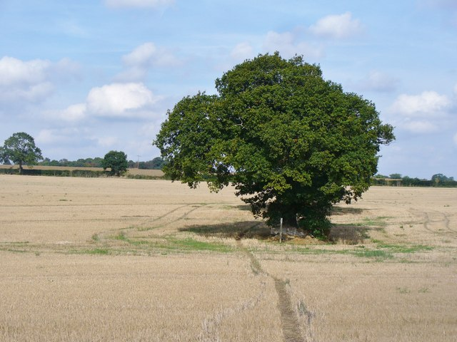 Pimlico - Isolated Tree