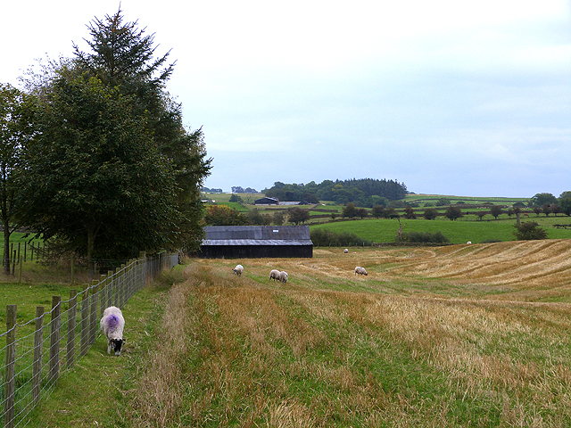 Field and shed near Ousby