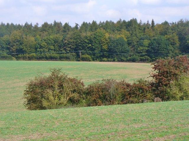 Bedmond - Fieldscape