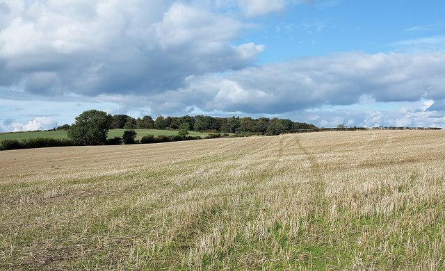 Stubble field near Witton Gilbert