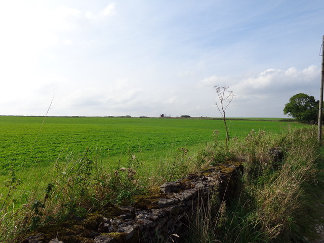 Grassland on Longbottom