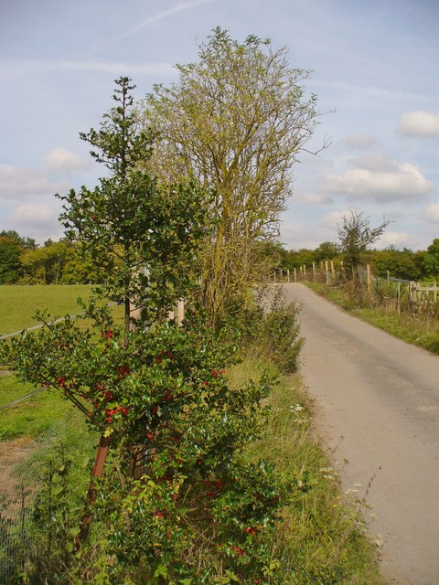 Bedmond - Country Lane