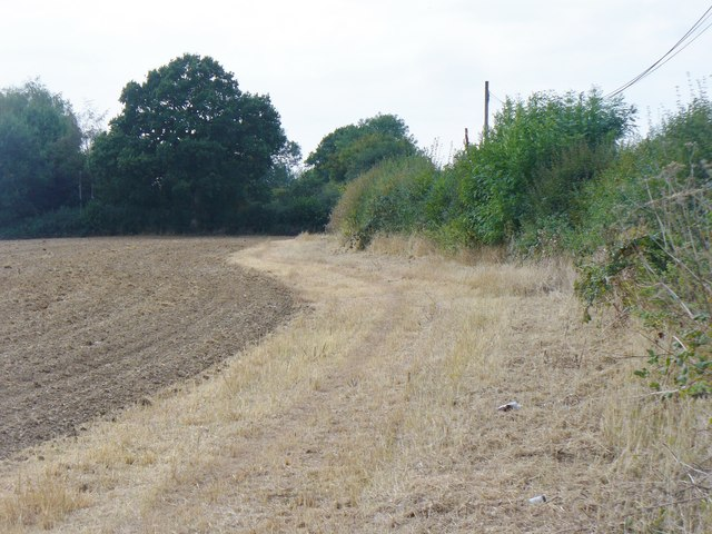 Harthall Lane - Field Edge
