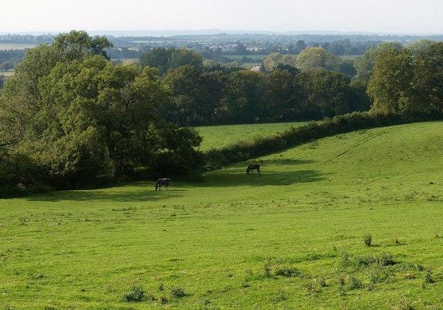 Pasture, Old Sodbury