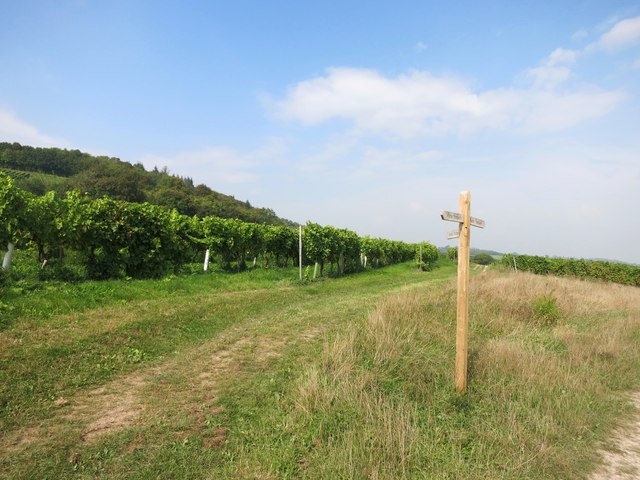 Paths in the Vineyard