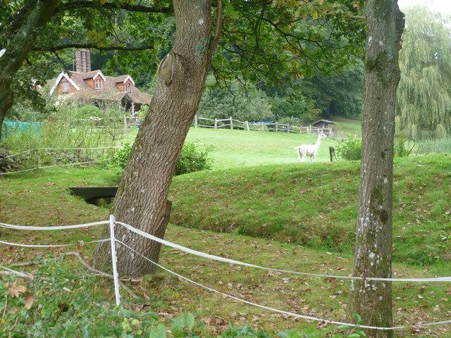 The alpacas' home seen from the Tunbridge Wells Circular Walk