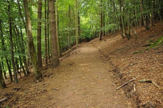 Woodland path, Hagley Park