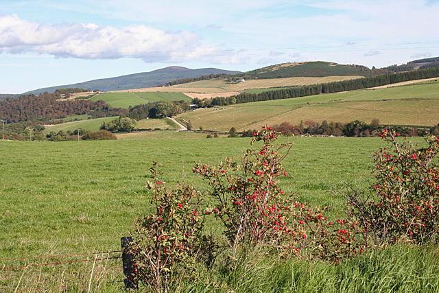 Fields at Edinvillie