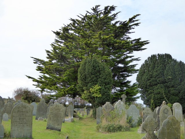 St Endellion churchyard and yew