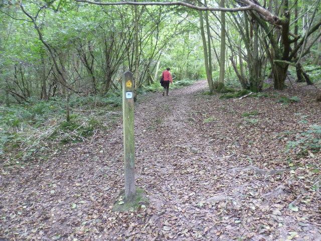The Tunbridge Wells Circular Walk in Toll Wood