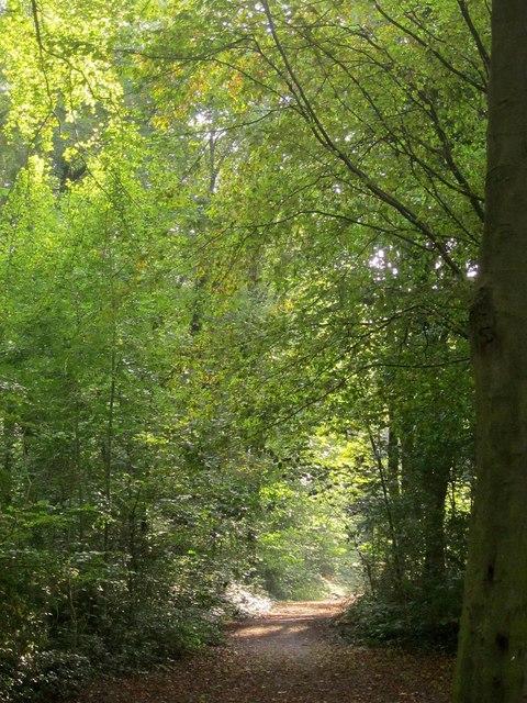 Path, Leigh Woods