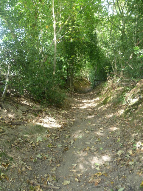 Sunken track on the slope of the Greensand Ridge