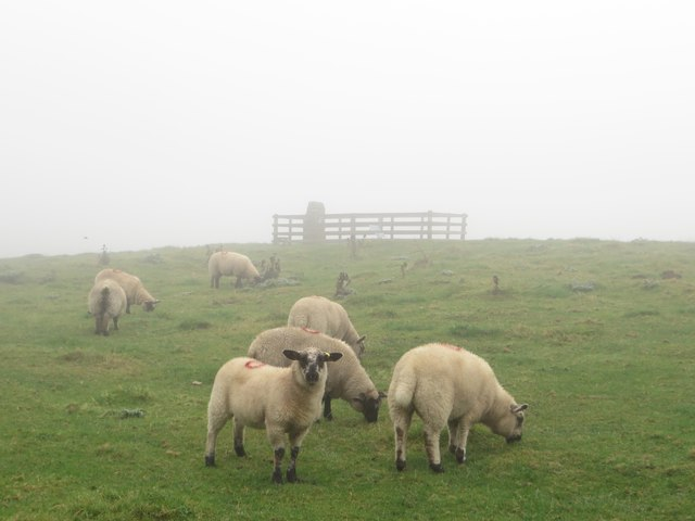 Sheep grazing at the summit of Duns Law