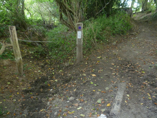 Ancient route blocked by tree