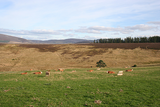 Farmland at Quirn