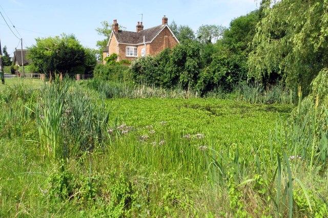 Overgrown pond in Marsh Gibbon