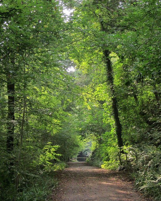 Path and cycle track, Leigh Woods
