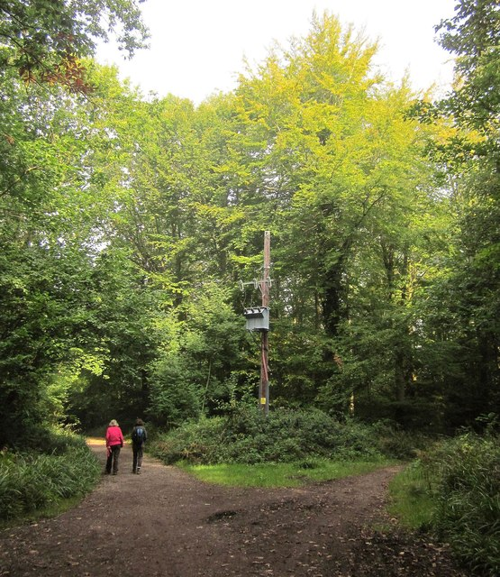 Track junction, Leigh Woods