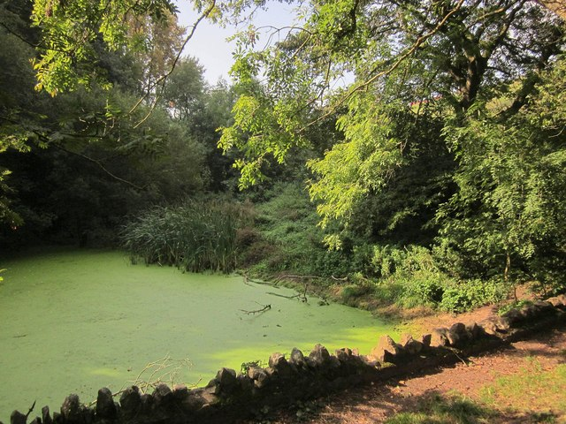 Pond, Leigh Woods
