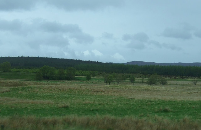 Grazing north of the A9