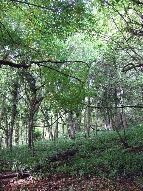 Mulgrave Estate Woodland