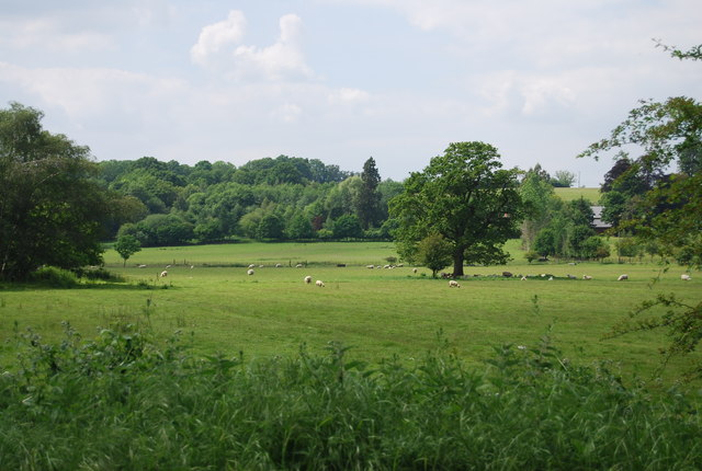 Sheep grazing in the Medway Valley