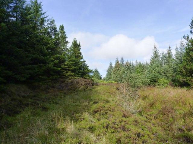 Overgrown footpath through Finlaggan Forest, Islay
