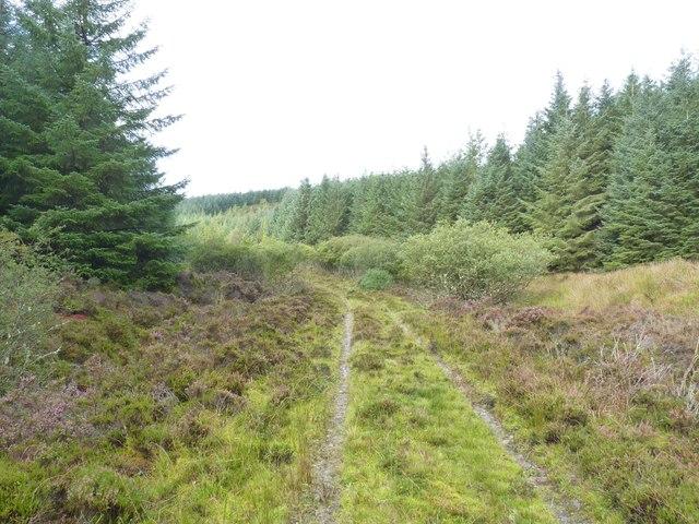 Forest Footpath, Finlaggan, Islay