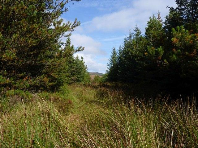 South-westwards Ride in Finlaggan Forest, Islay
