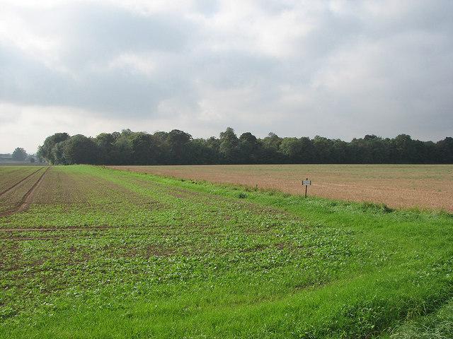 Towards Hayfield Plantation