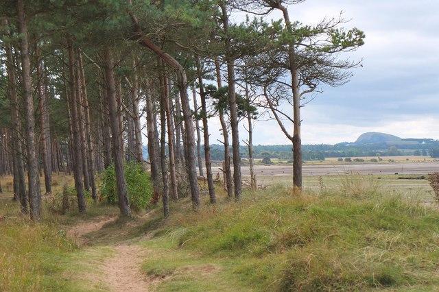 Coastal path, Hedderwick Hill Plantation