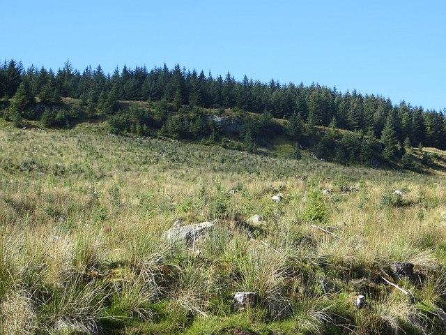 Eredine Forest