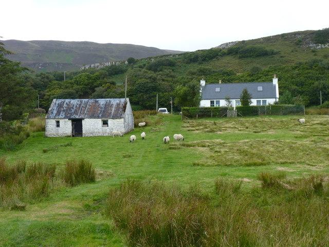 Sheep farming in Balmeanach